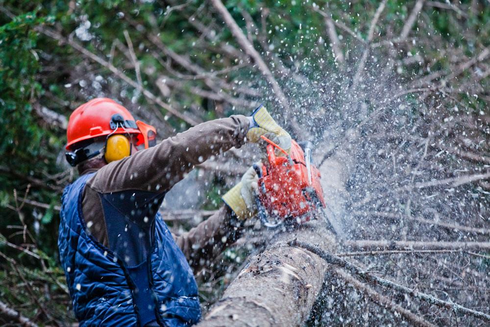 professional-lumberjack-cutting-a-big-tree-in-the-PYUCLX3