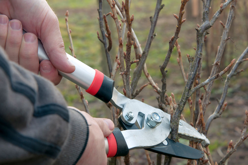 pruning-of-trees-PZQ3SCD
