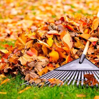 fall clean up gcs